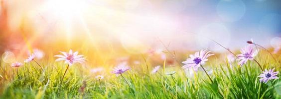 Spring edition of Member Newsletter
