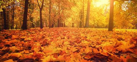 Autumn edition of Member Newsletter